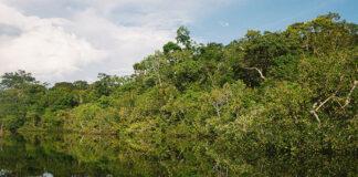 Przyrodnicze bogactwo Amazonii